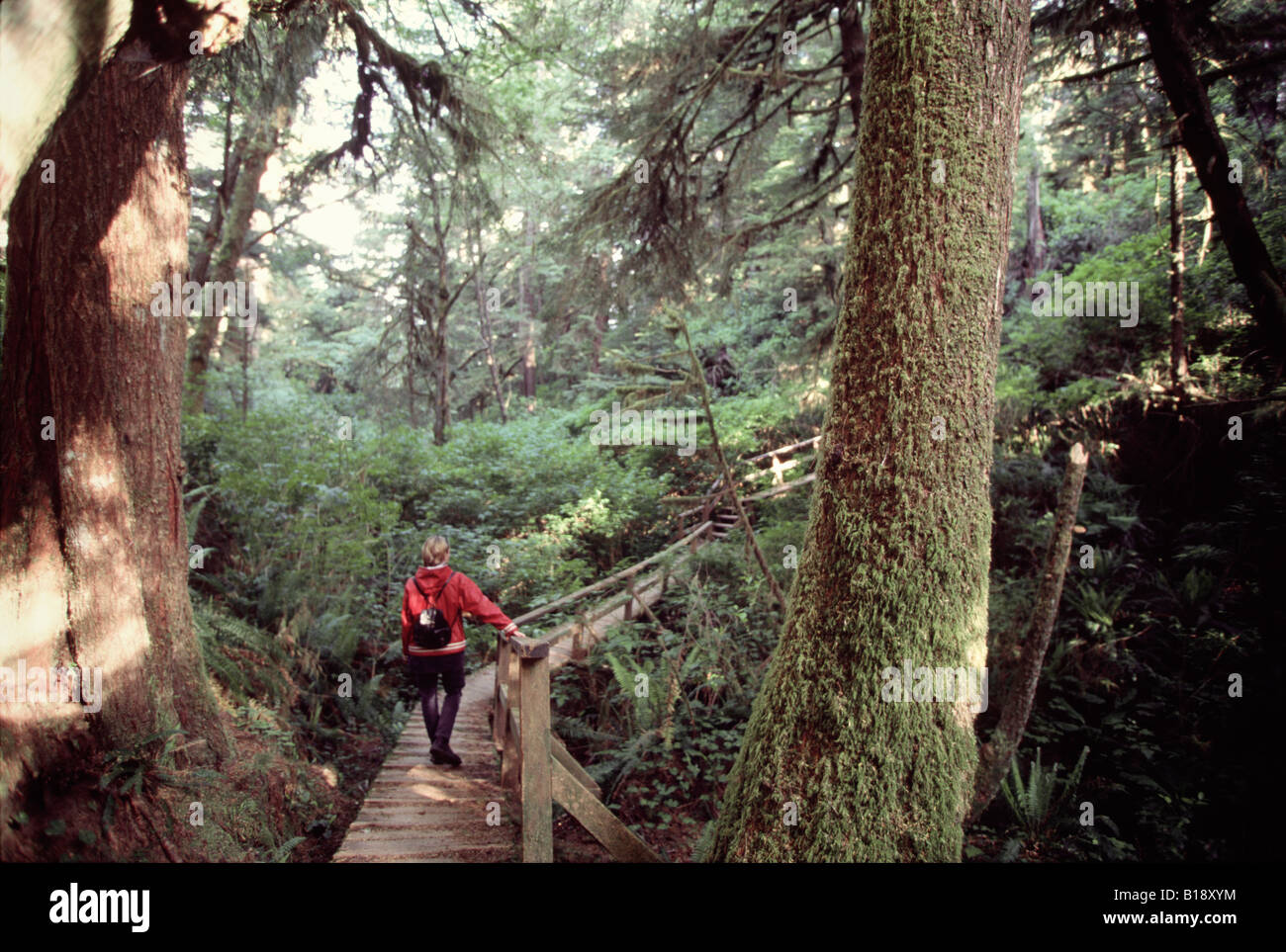 20 year old Young woman walking on the boardwalk through the forest towards the beach, Schooner Bay, Vancouver Island, - Stock Image