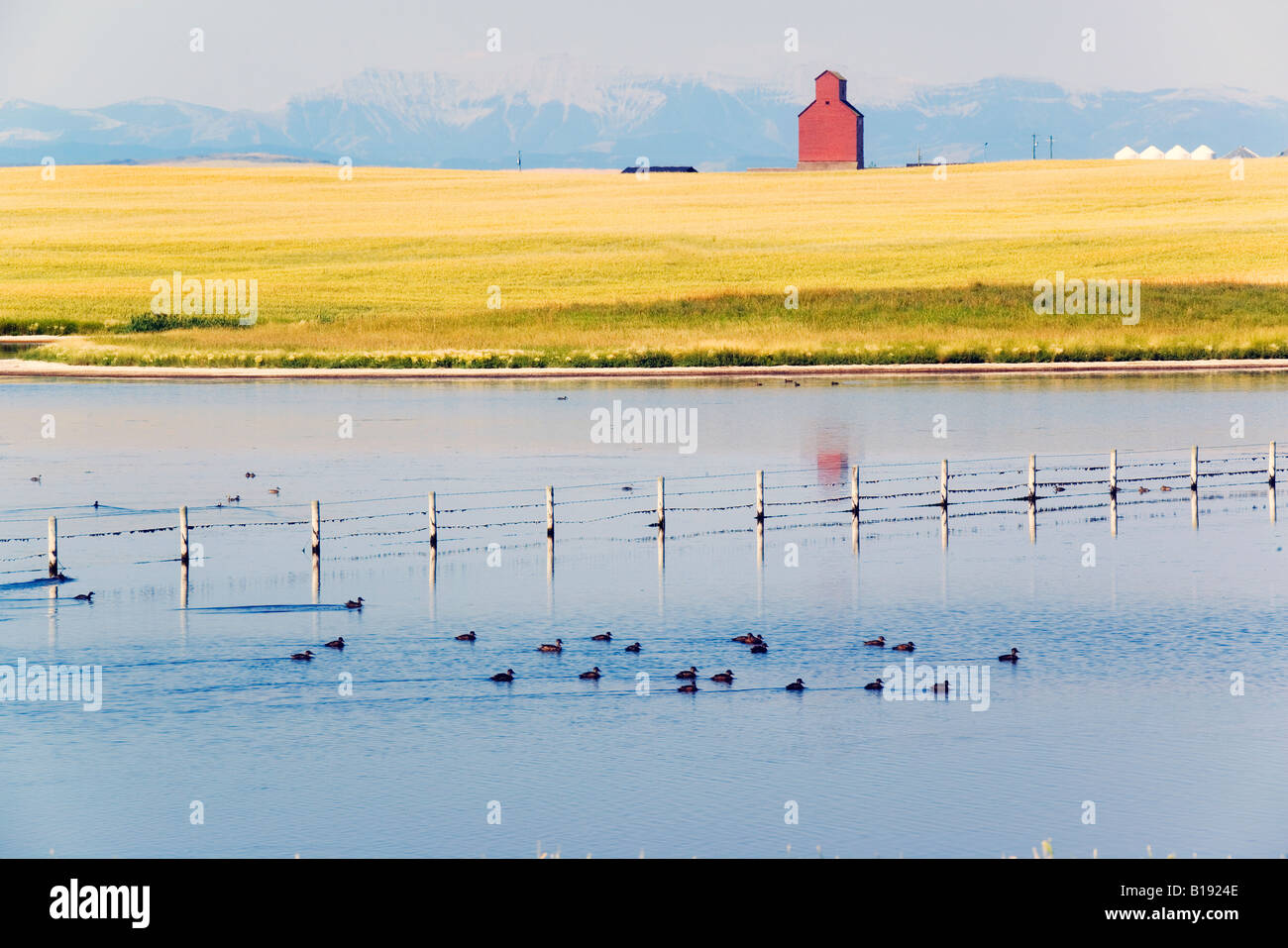 Slew with ducks and Grain elevator, Azure, The Foothills, Alberta, Canada. - Stock Image