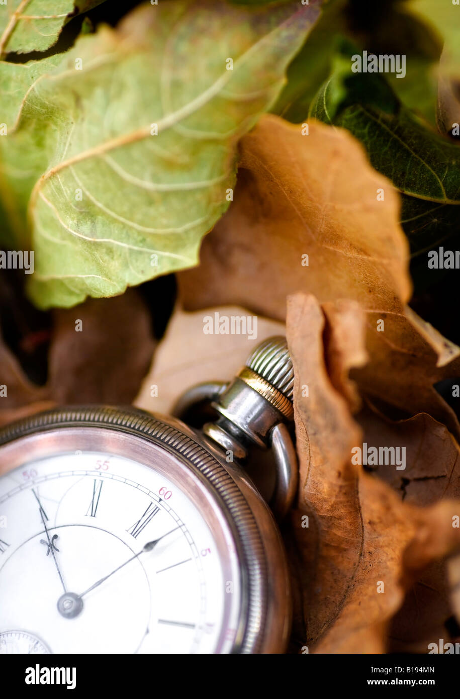 Pocket watch on leaves - Stock Image