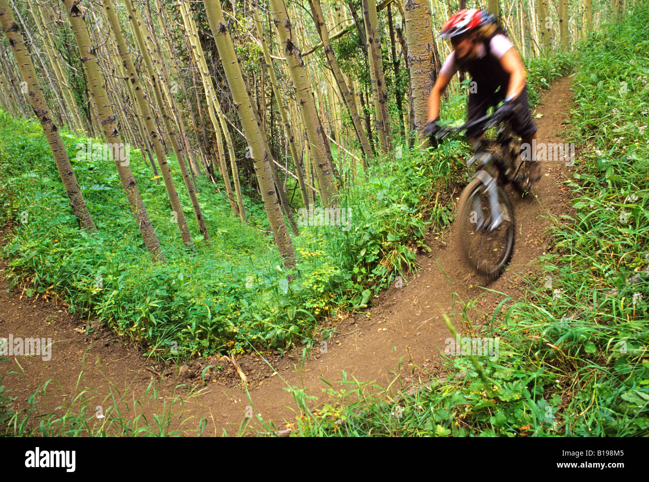 Mountain biker rides down the Gun Creek Trail from Spruce Lake, Southern Chilcotin Mountains, British Columbia, Stock Photo