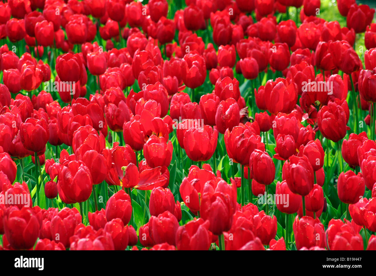 Spain, Madrid. Flowers in the Public Realm. - Stock Image