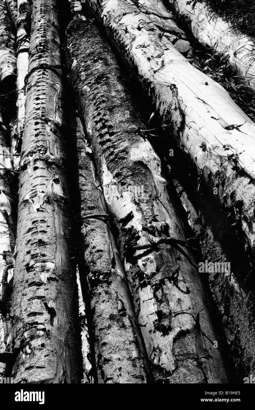 Timber, black and white - Stock Image