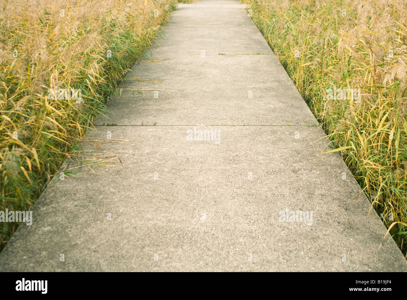 Sidewalk cutting through field - Stock Image