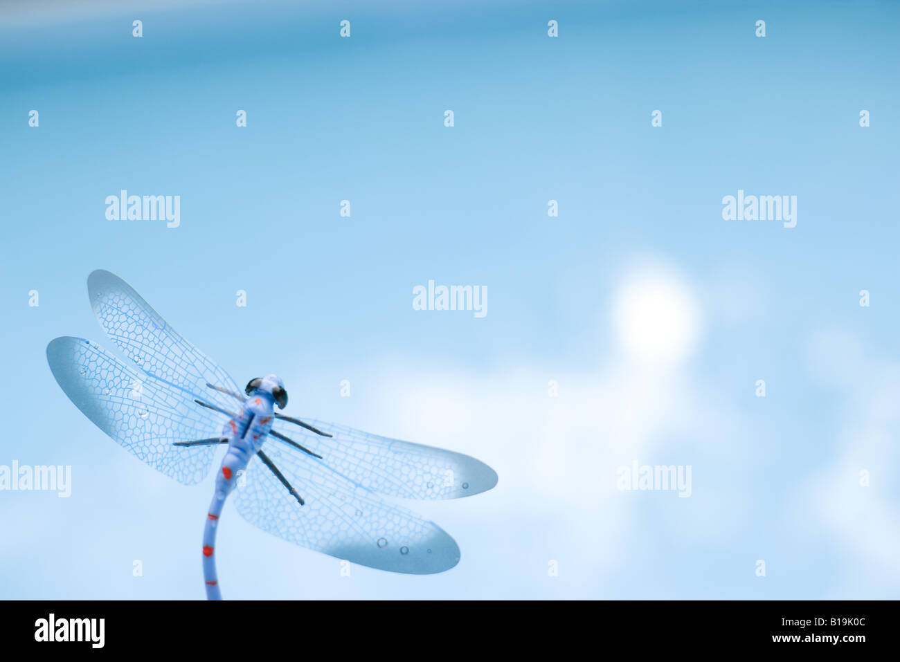 Dragonfly, close-up - Stock Image