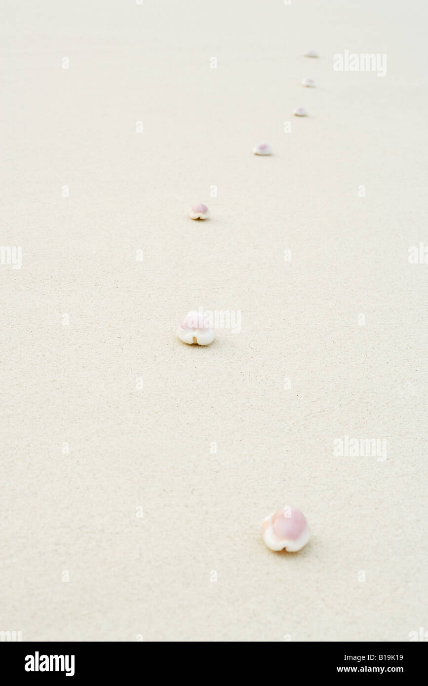 Cowrie seashells (Cypraeidae) lined up on the beach, close-up - Stock Image