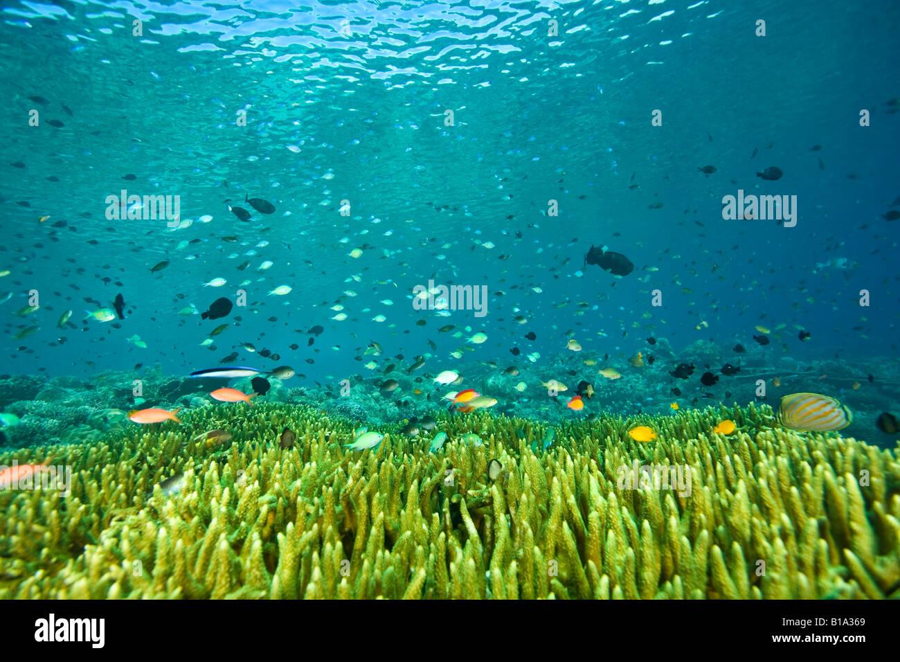 Schooling fish - Stock Image