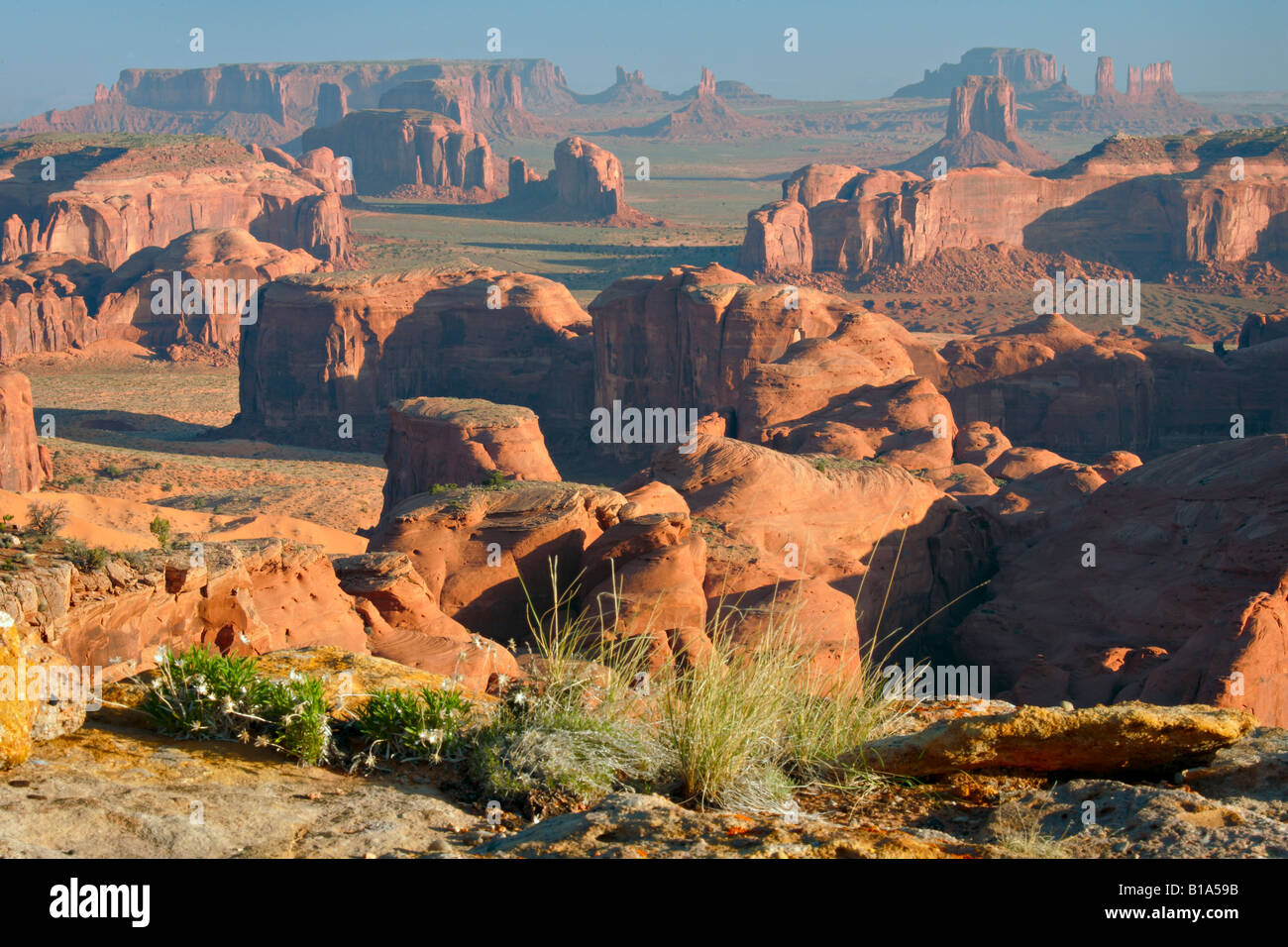Wildflowers on Hunts Mesa in Monument Valley AZ - Stock Image