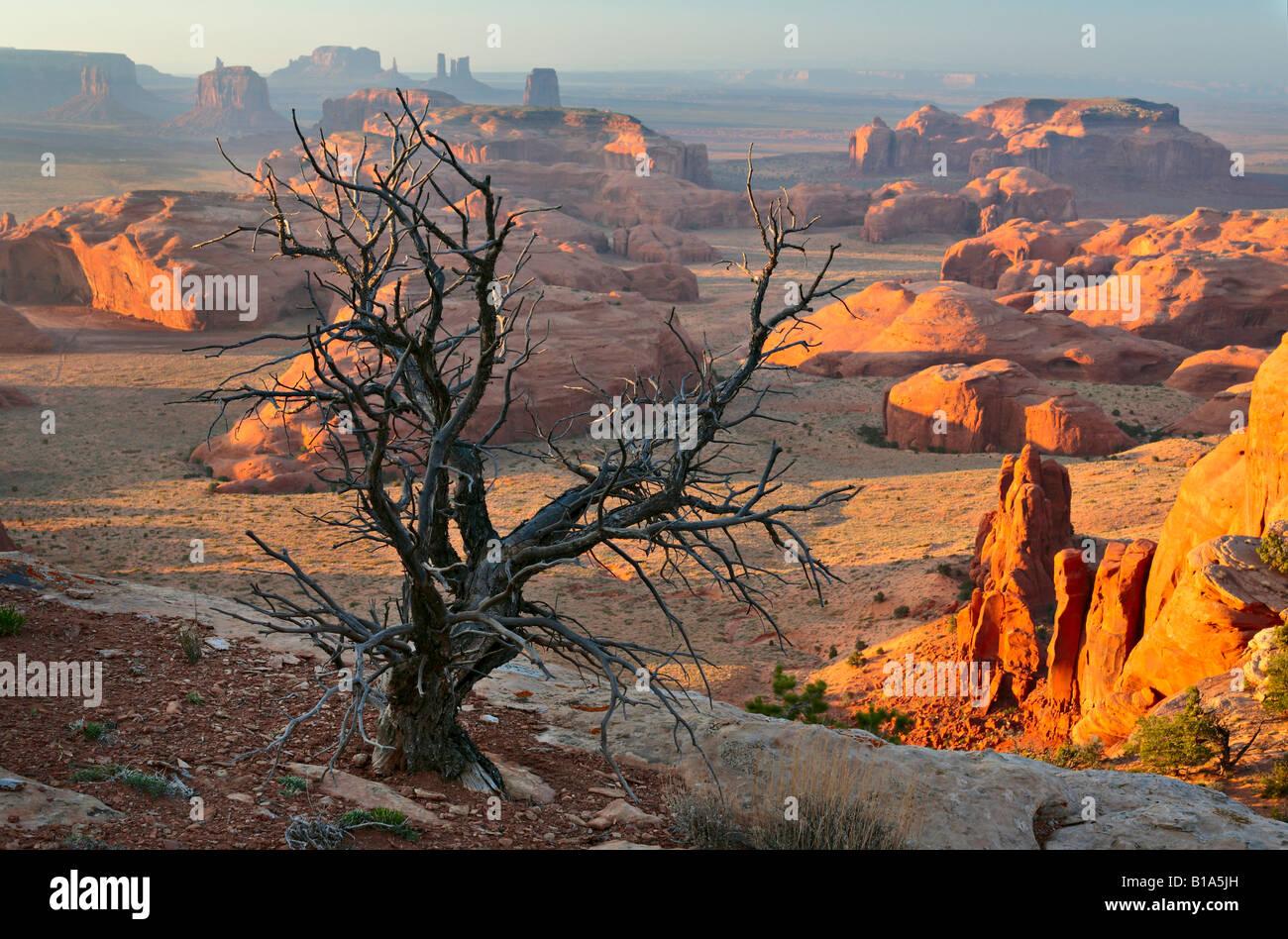 Dead tree on Hunt's Mesa in Monument Valley, Arizona - Stock Image