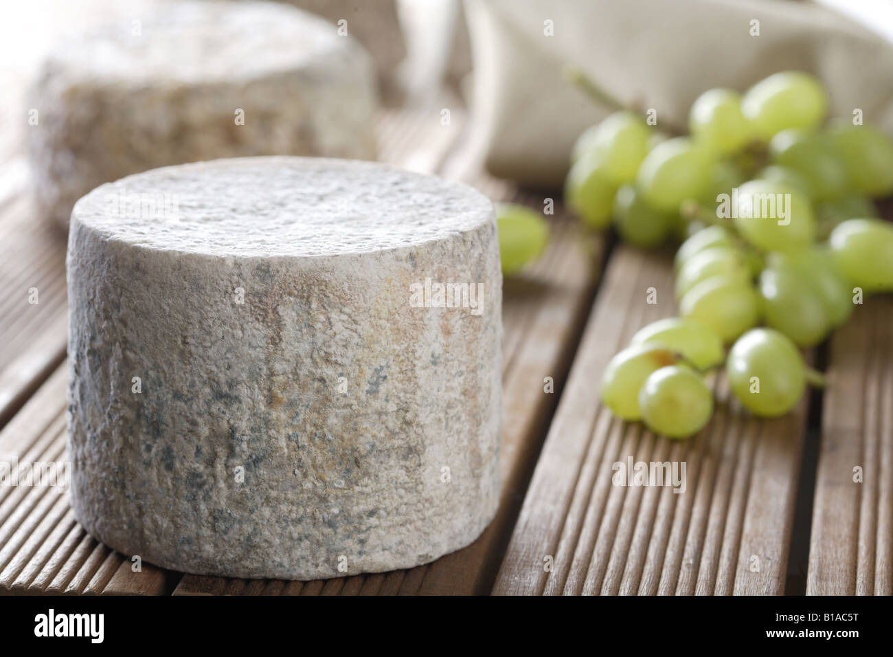 Goat cheese - Stock Image