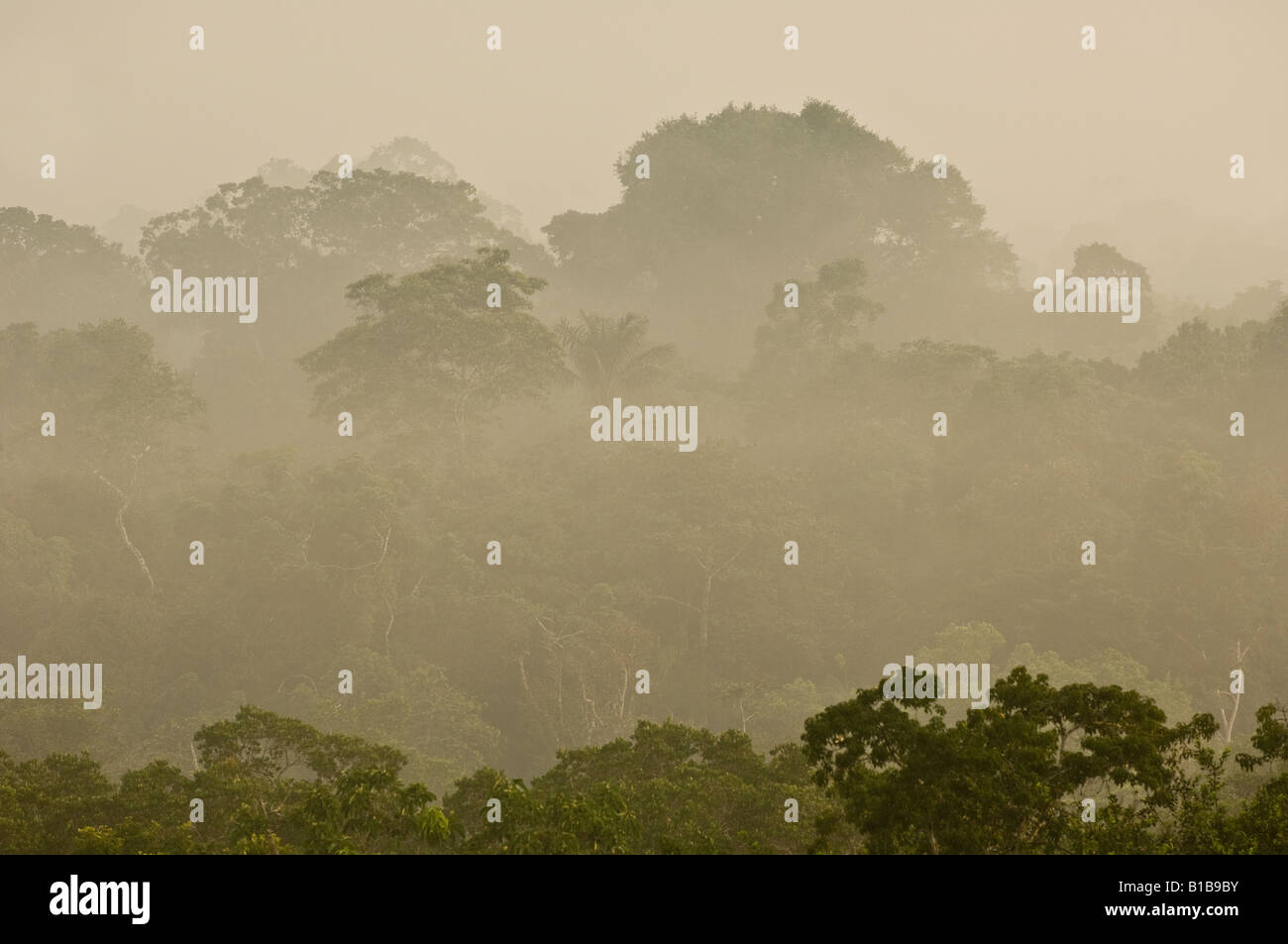Morning mist rising shortly after sunrise in the Amazon rainforest - Stock Image