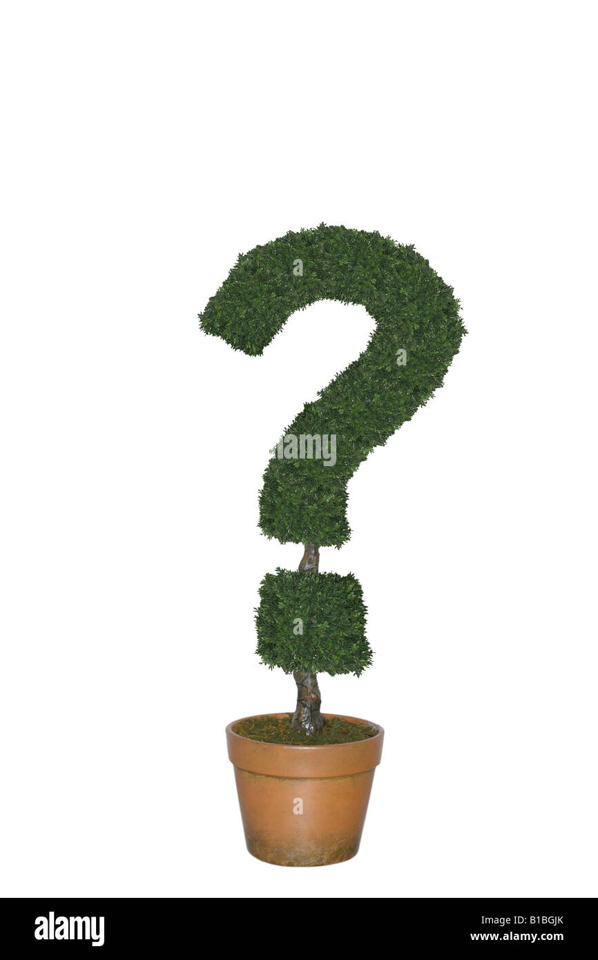 Topiary tree in shape of question mark cut out on white background - Stock Image