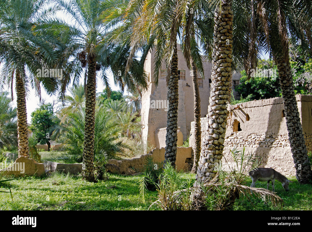 geography / travel, Oman, Al-Hamra, oasis with palm trees, Additional-Rights-Clearance-Info-Not-Available - Stock Image