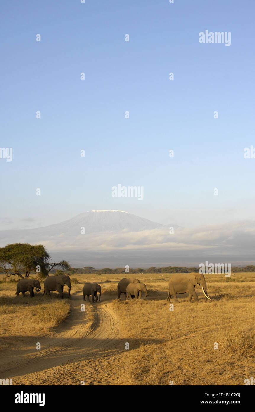 geography / travel, Kenya, Kimana Reservation, Mount Kilimanjaro, group of elephants, Additional-Rights-Clearance - Stock Image