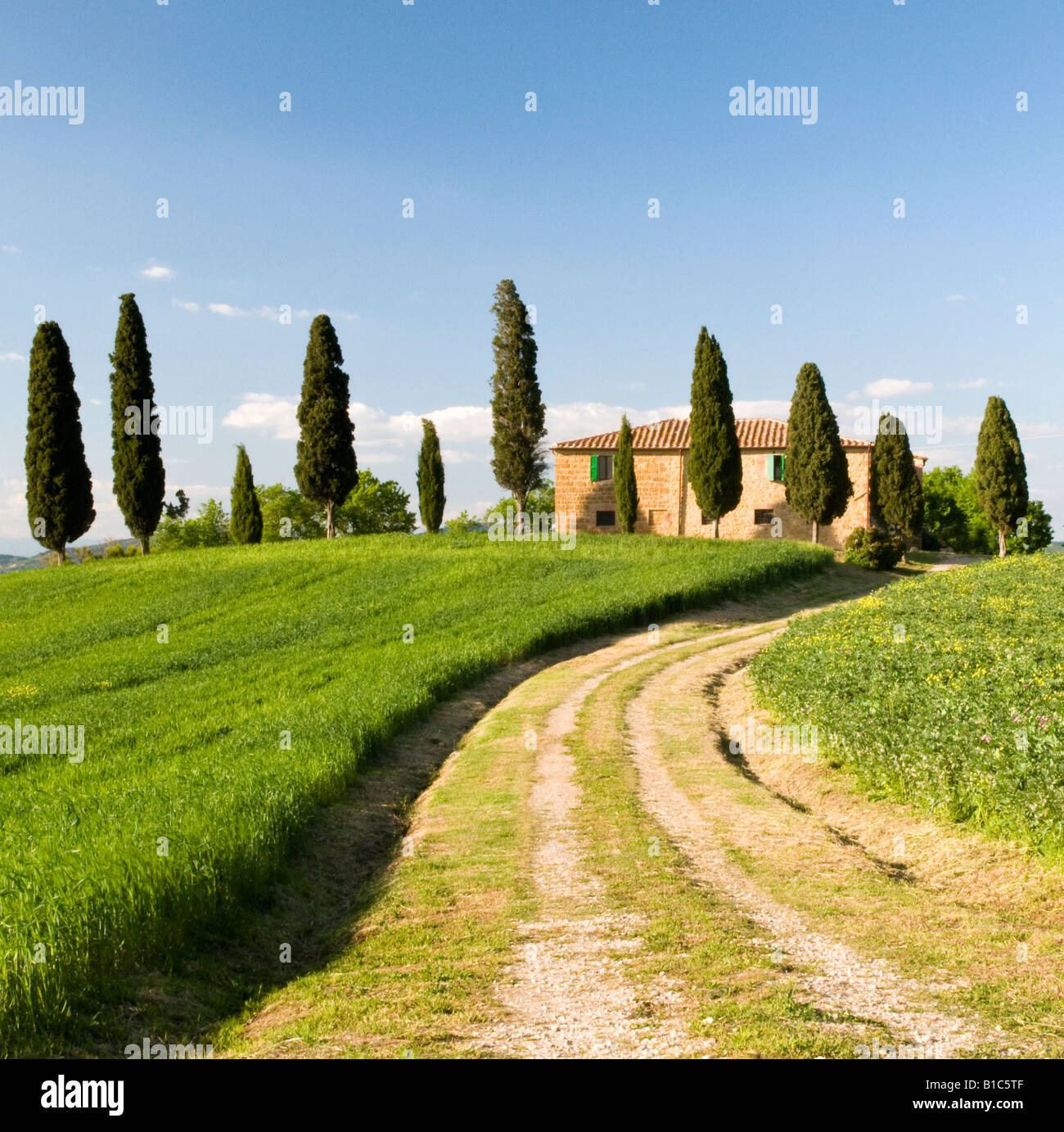 Farmhouse and Cypress trees, Valle de Orcia, Tuscany, Italy - Stock Image