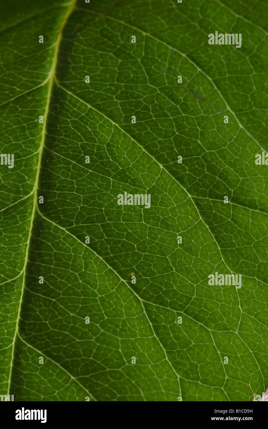 Textured Leaf - Stock Image