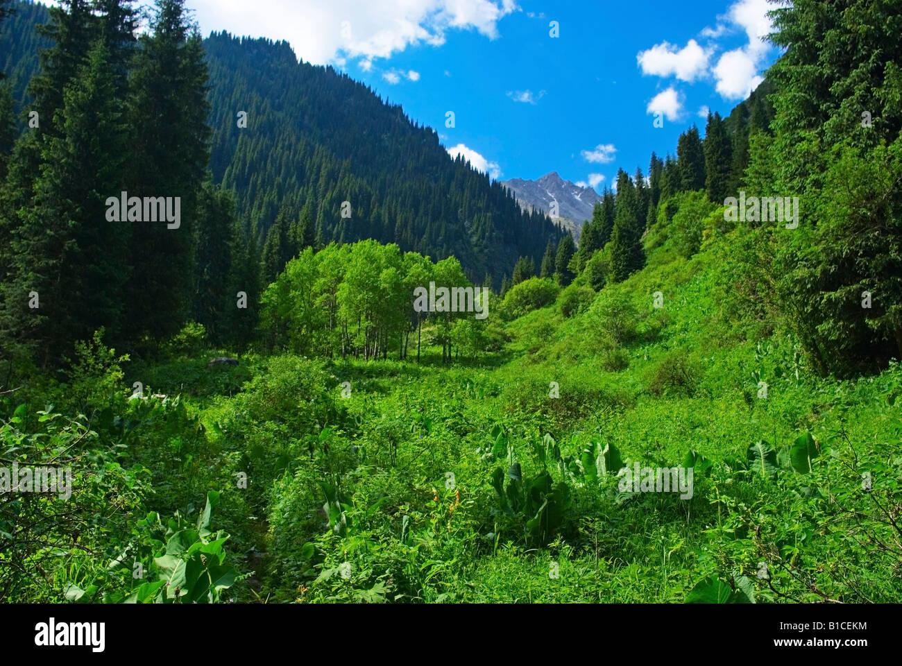 Mountain Gorge - Stock Image