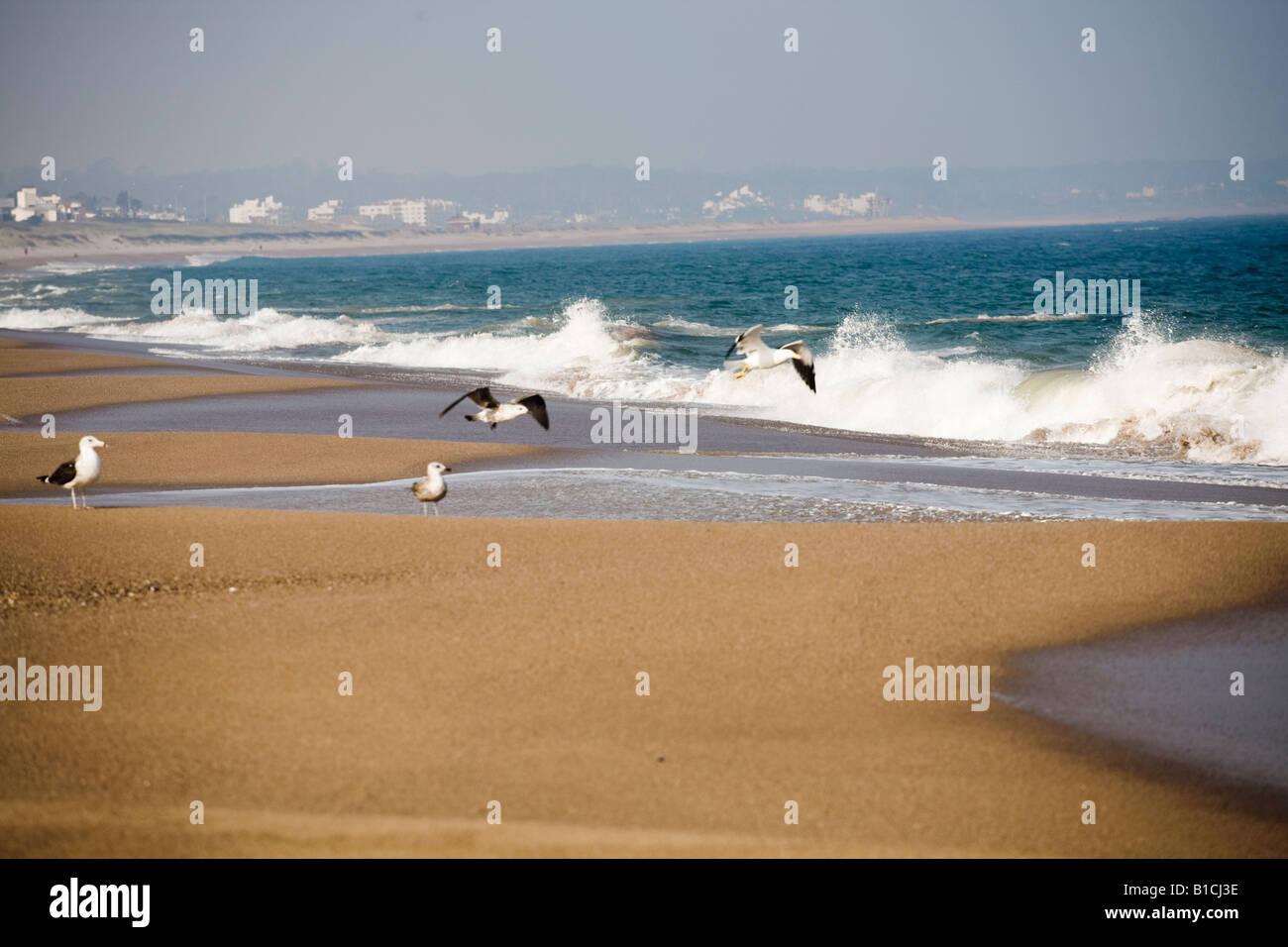 Empty Mansa beach seen Punta del Este Uruguay - Stock Image