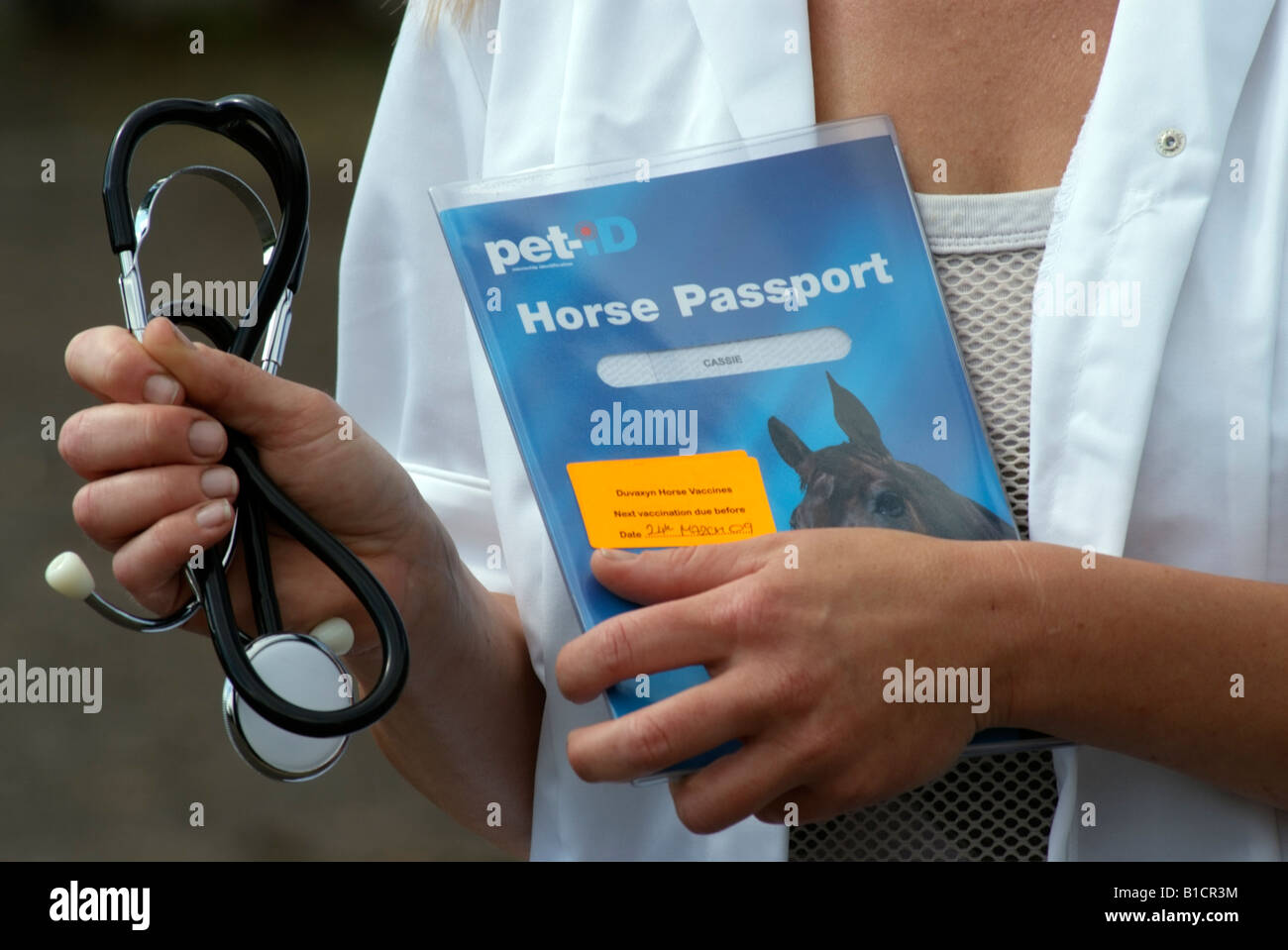 Veterinary officer holding a stethoscope and Pet ID Horse Passport - Stock Image