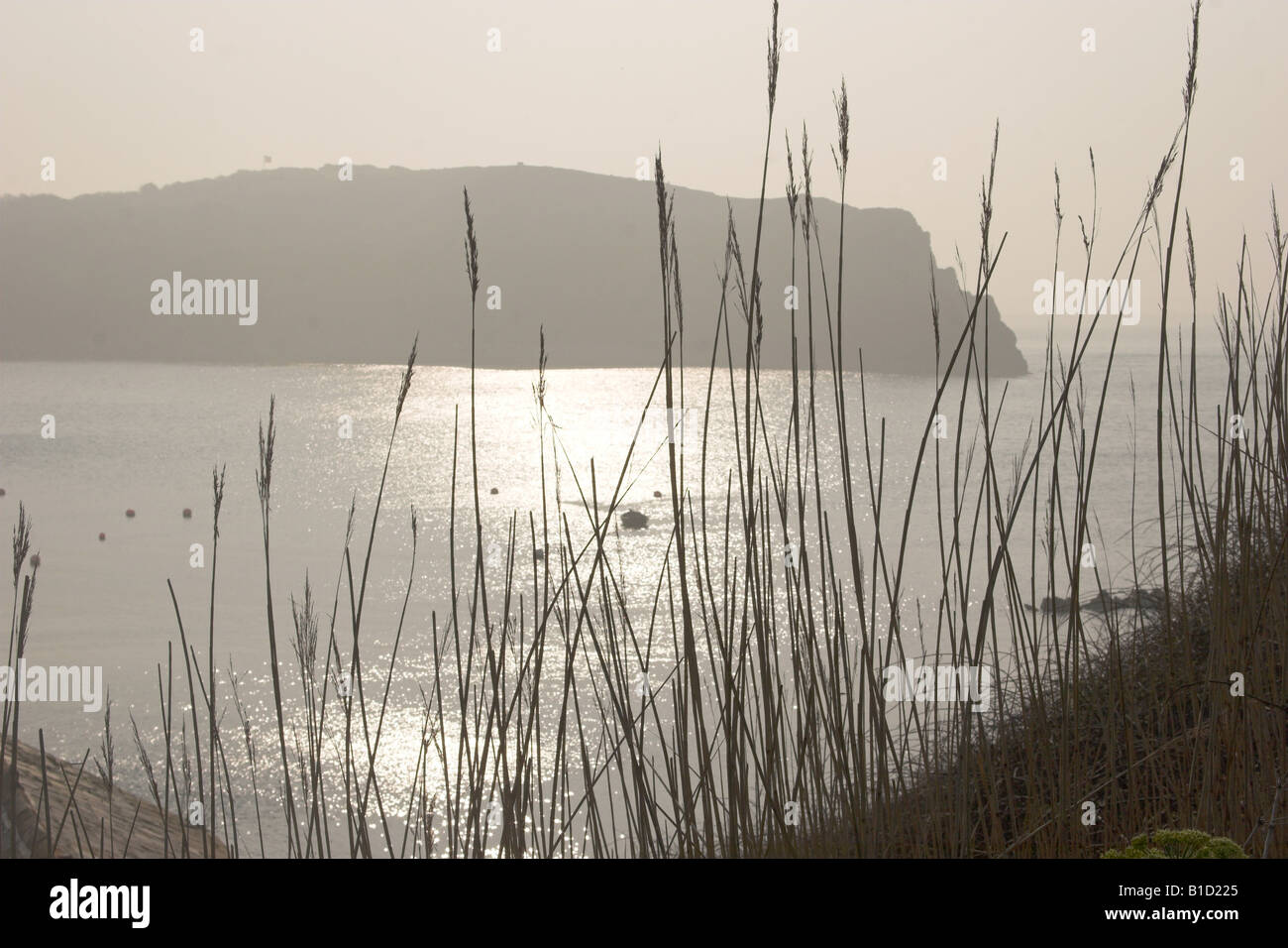 An early morning view over Lulworth Cove, Dorset - Stock Image