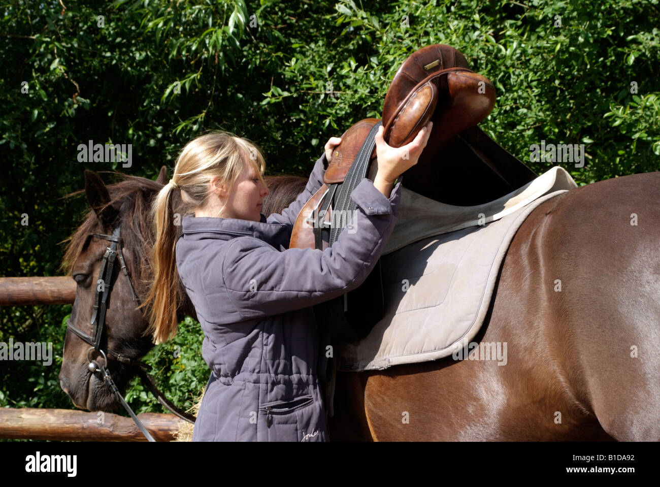 Woman placing saddle onto her pony Saddling her pet pony - Stock Image