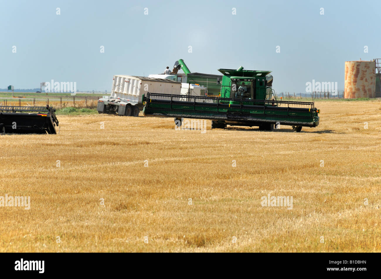 A custom harvest crew cuts wheat in central Oklahoma, USA, North America. - Stock Image