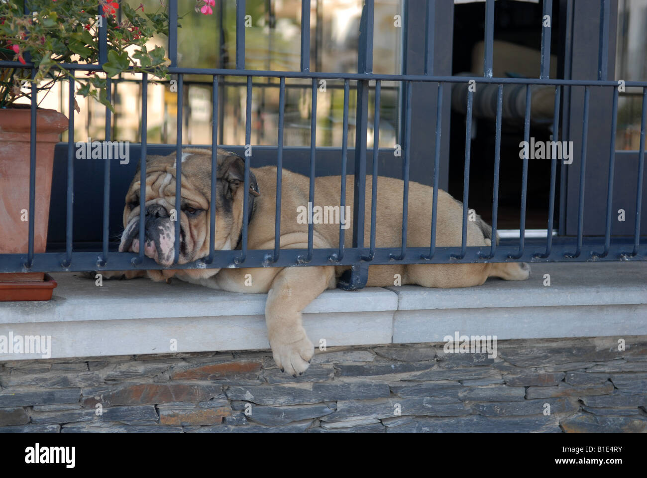Sleeping dog on balcony - Stock Image