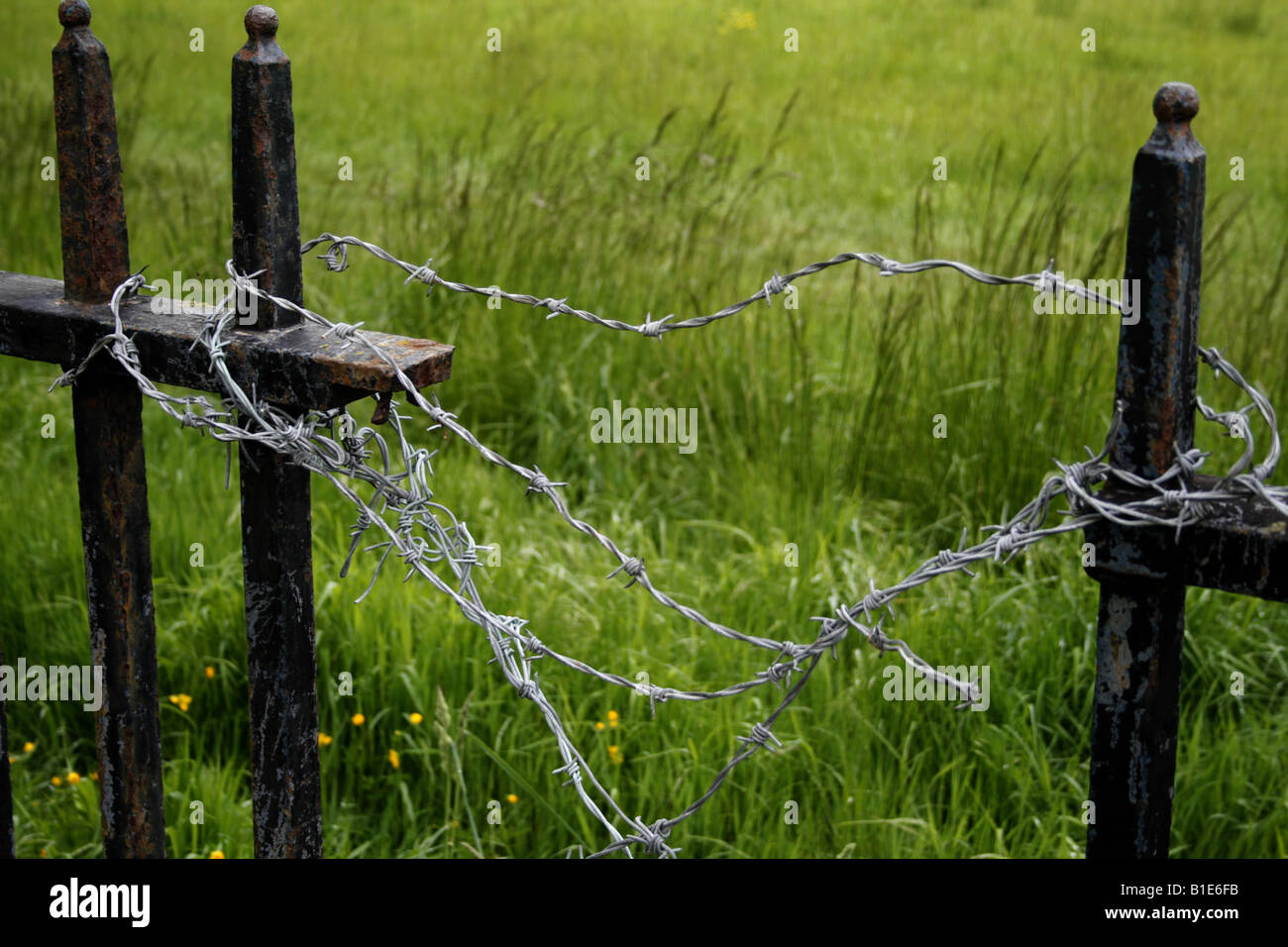barbed wire on metal fencing posts england uk 2008 - Stock Image