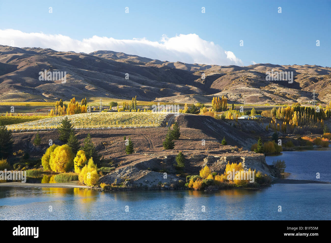 Carrick Vineyards and Lake Dunstan Bannockburn Central Otago South Island New Zealand - Stock Image