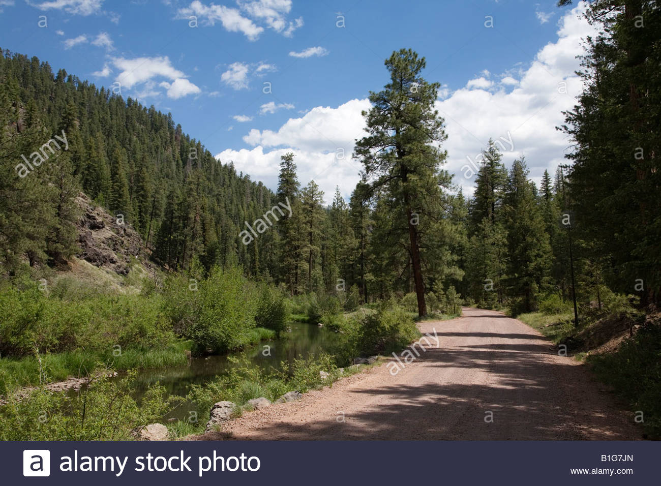 East Fork Black River mountain stream forest road dirt rural summer clouds creek Apache National Forest - Stock Image
