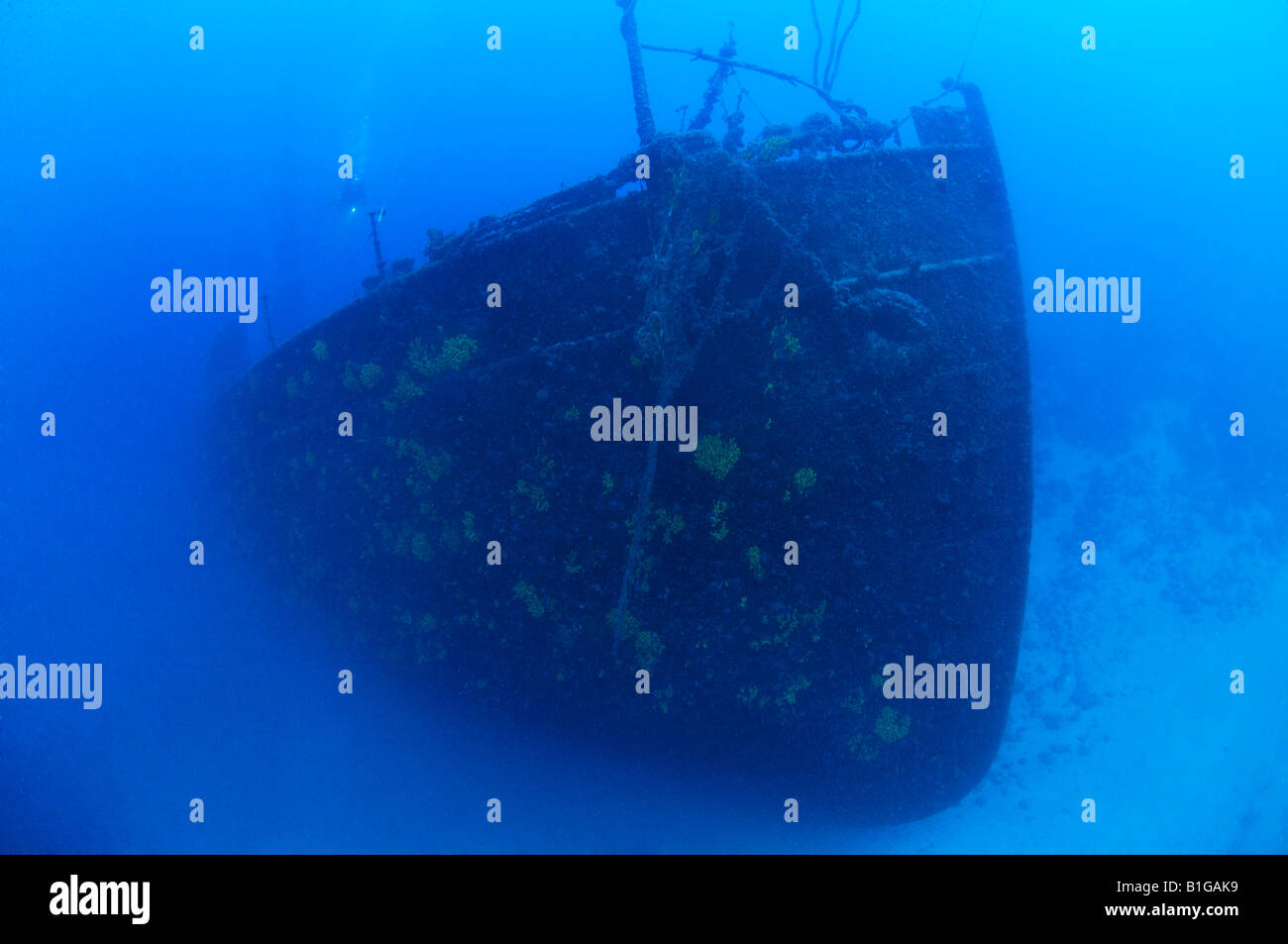 scuba diver shipwreck lina - Stock Image