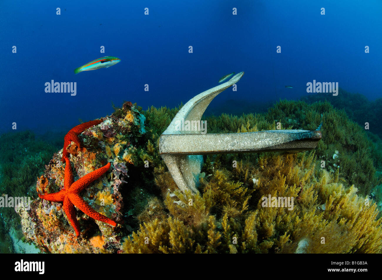 anchor on colorful seafloor - Stock Image