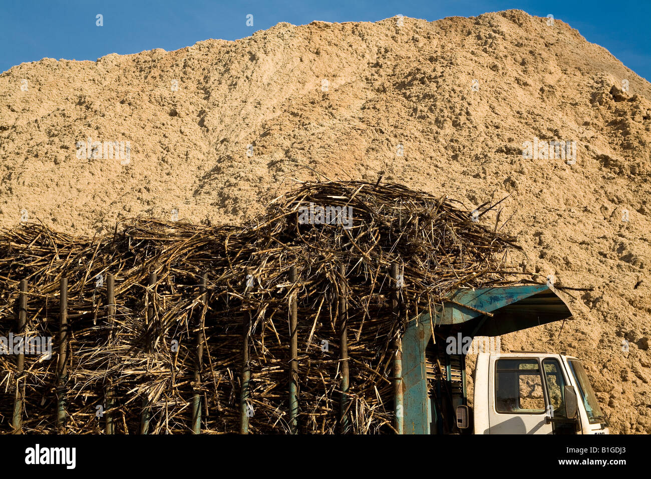 Truck loaded with sugarcane wait in line for unloading at Ester ethanol Plant in front of pile of sugarcane bagasse - Stock Image