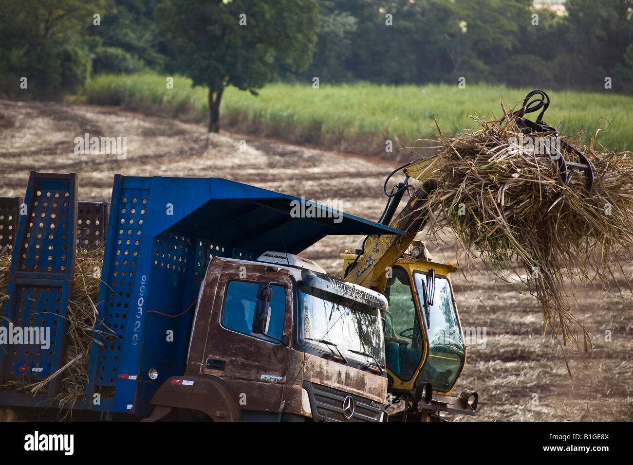 Machinery gathers sugarcane and loads truck for transporting to the mill for ethanol and sugar production Brazil - Stock Image