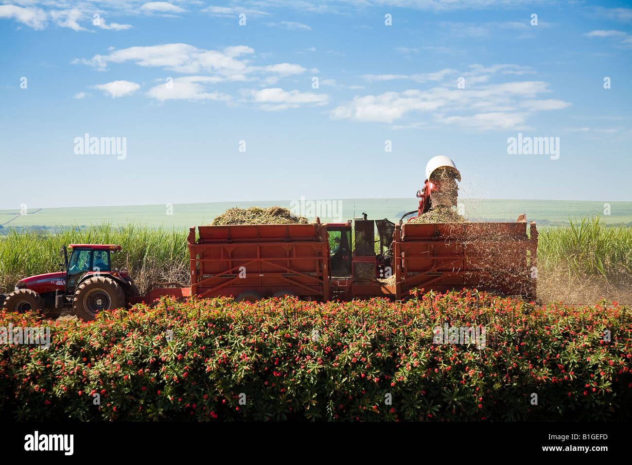Mechanized agriculture sugarcane cutting for production of ethanol and sugar Brazil May 2008 - Stock Image