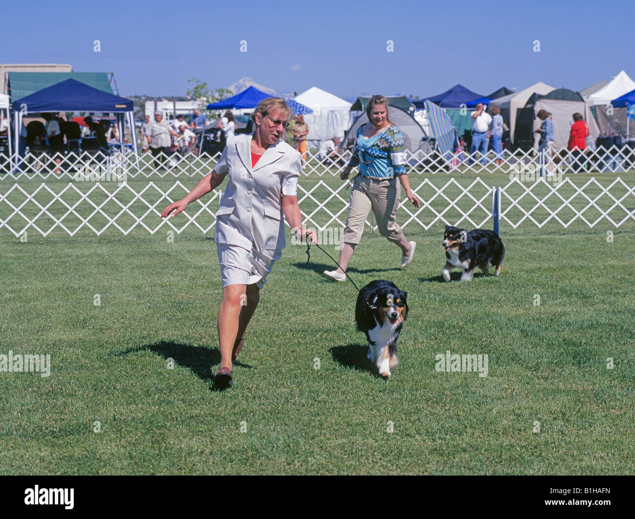 Two women show their Australian Shepherds in the Best Of Breed competition at an American Kennel Club AKC dog show - Stock Image