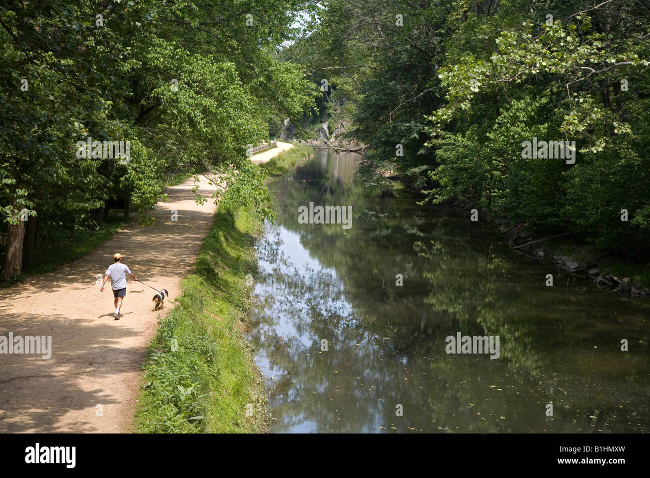 Man Walks Dog on the C and O Canal Towpath - Stock Image