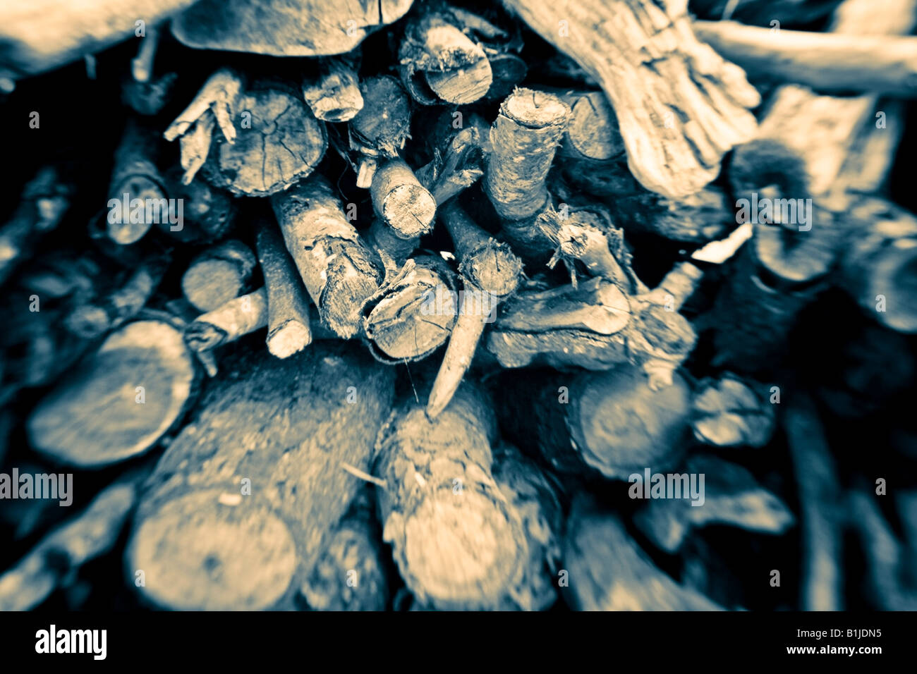 Sepia tones close up of a pile of driftwood stacked for burning USA - Stock Image