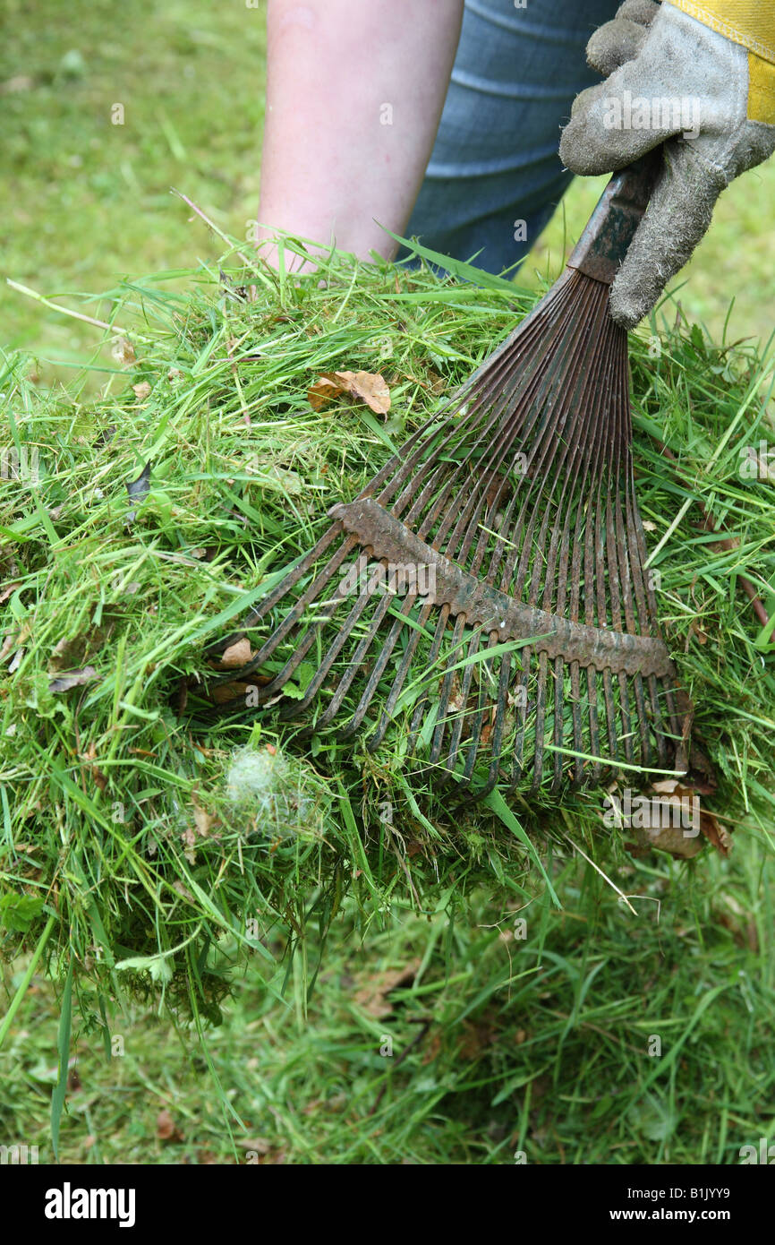 USING A LAWN RAKE TO PICK UP GRASS CLIPPINGS - Stock Image