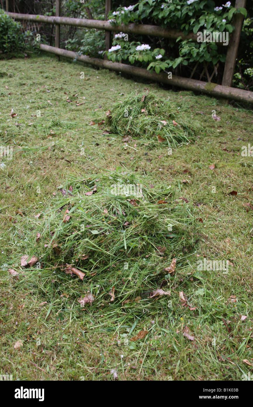 RAKE GRASS CLIPPINGS INTO PILES - Stock Image