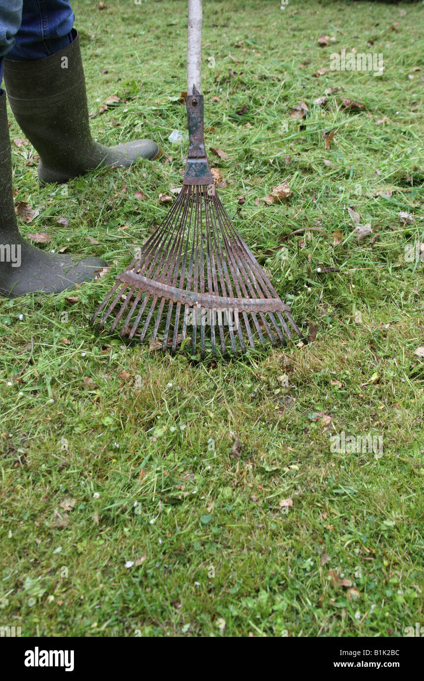 RAKING UP GRASS CLIPPINGS WITH A LAWN RAKE - Stock Image