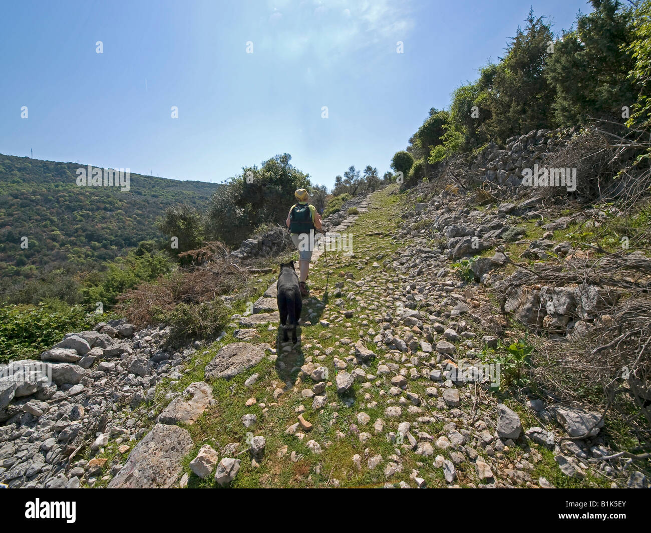 woman with dog hiking on stony old historic road through maquis shrubland macchia on the island Cres Croatia - Stock Image