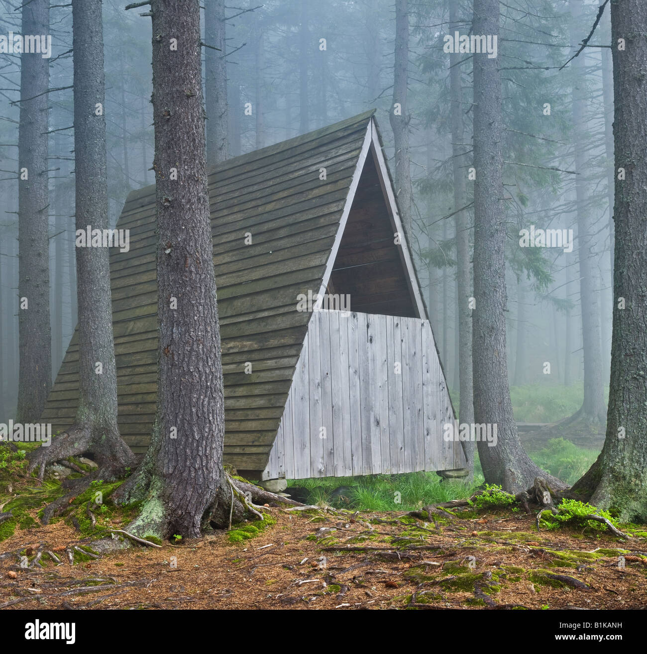 forest landscape - Stock Image