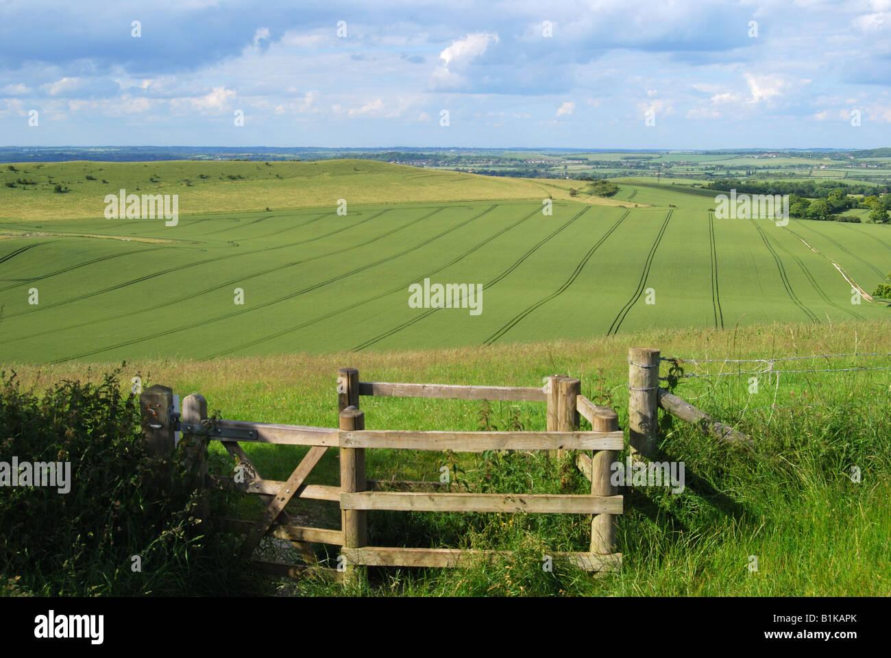 Views of chalk downlands on edge of Chiltern Hills, Ashridge Estate, Buckinghamshire, England, United Kingdom - Stock Image