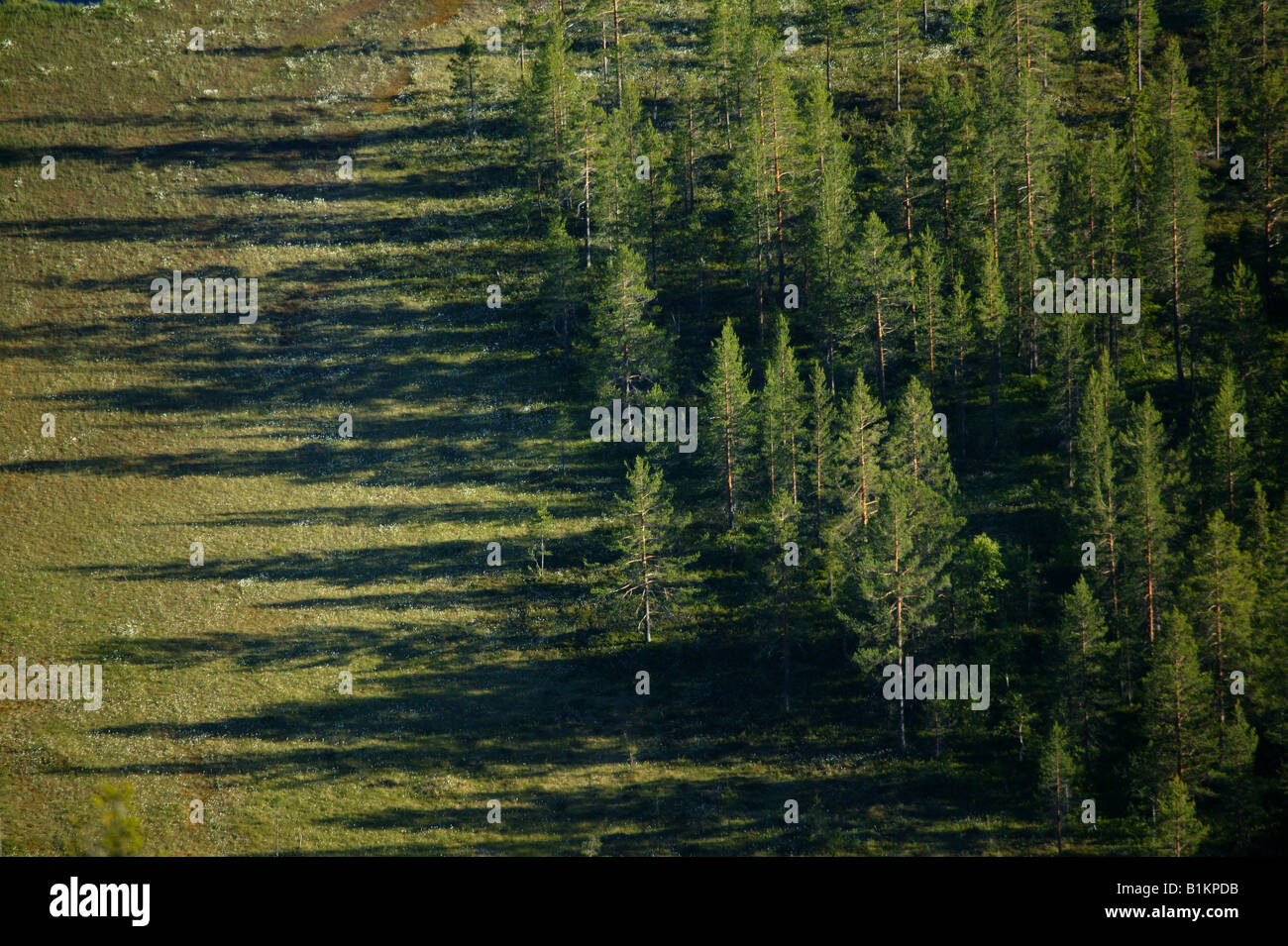 Pine forest and marshlands below the mountain Andersnatten in Eggedal, Buskerud fylke, Norway. - Stock Image