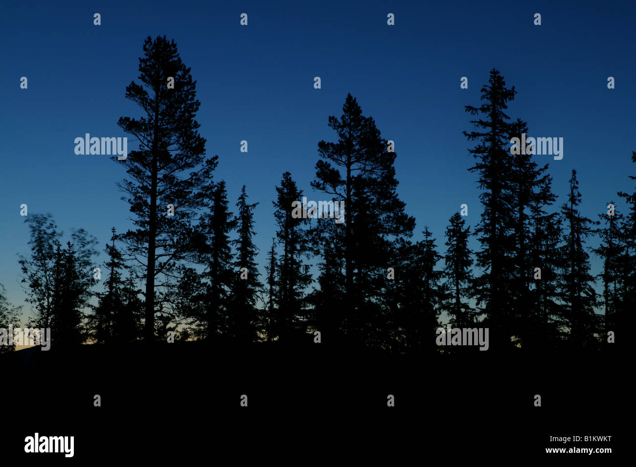 Forest at night at the mountain Andersnatten in Eggedal, Buskerud fylke, Norway. - Stock Image