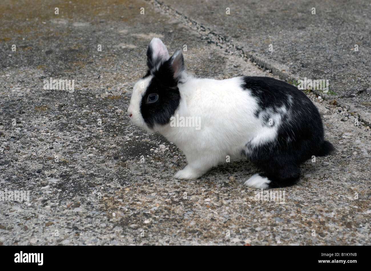 Pet Rabbit Run Stock Photos & Pet Rabbit Run Stock Images - Alamy