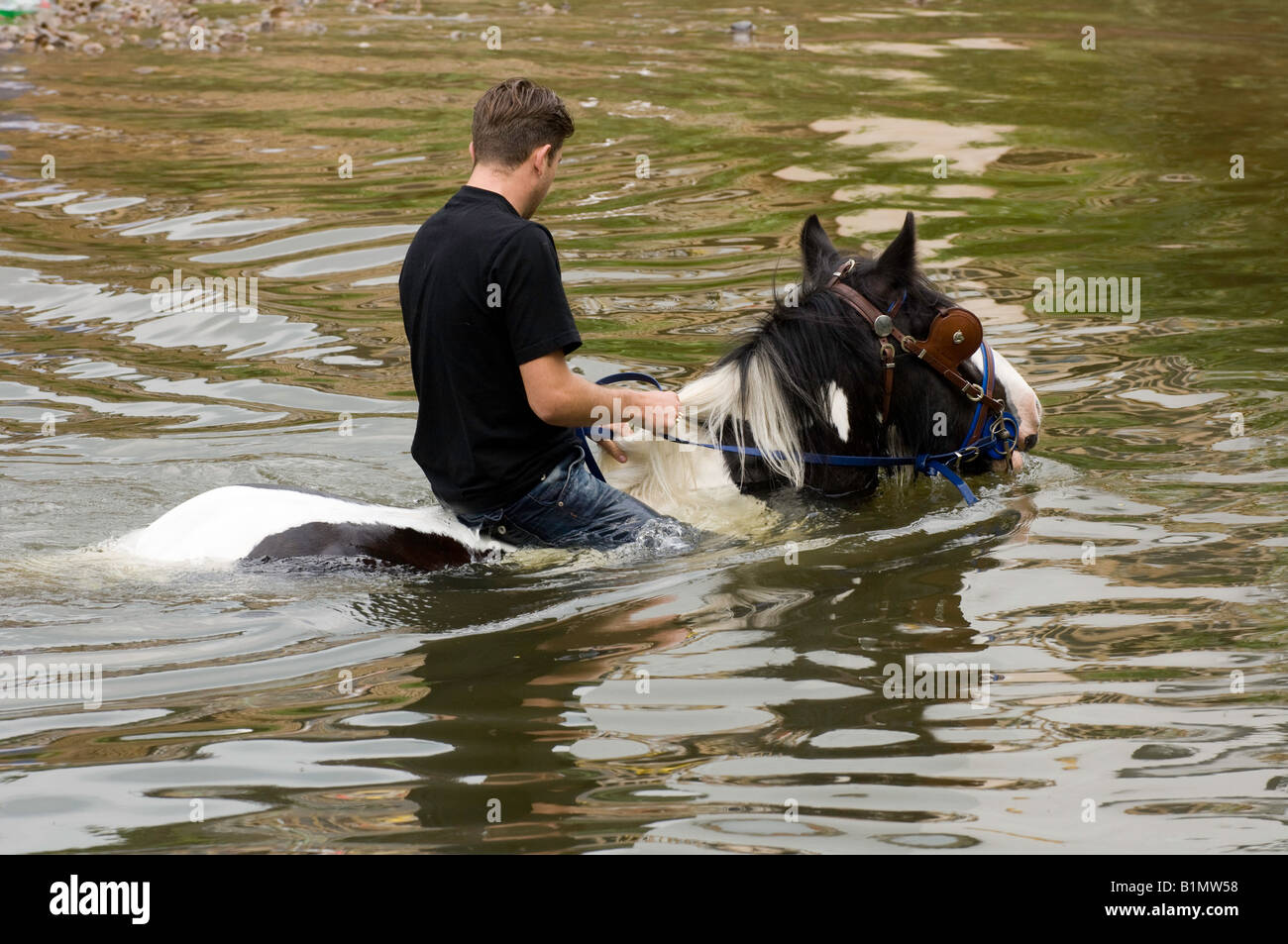 Washing horses in the River Eden at the ancient Appleby Horse Fair held each June Stock Photo