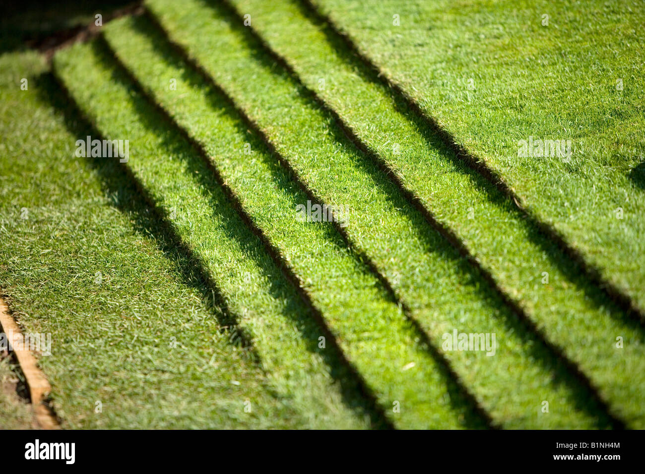 steps in a grass lawn - Stock Image