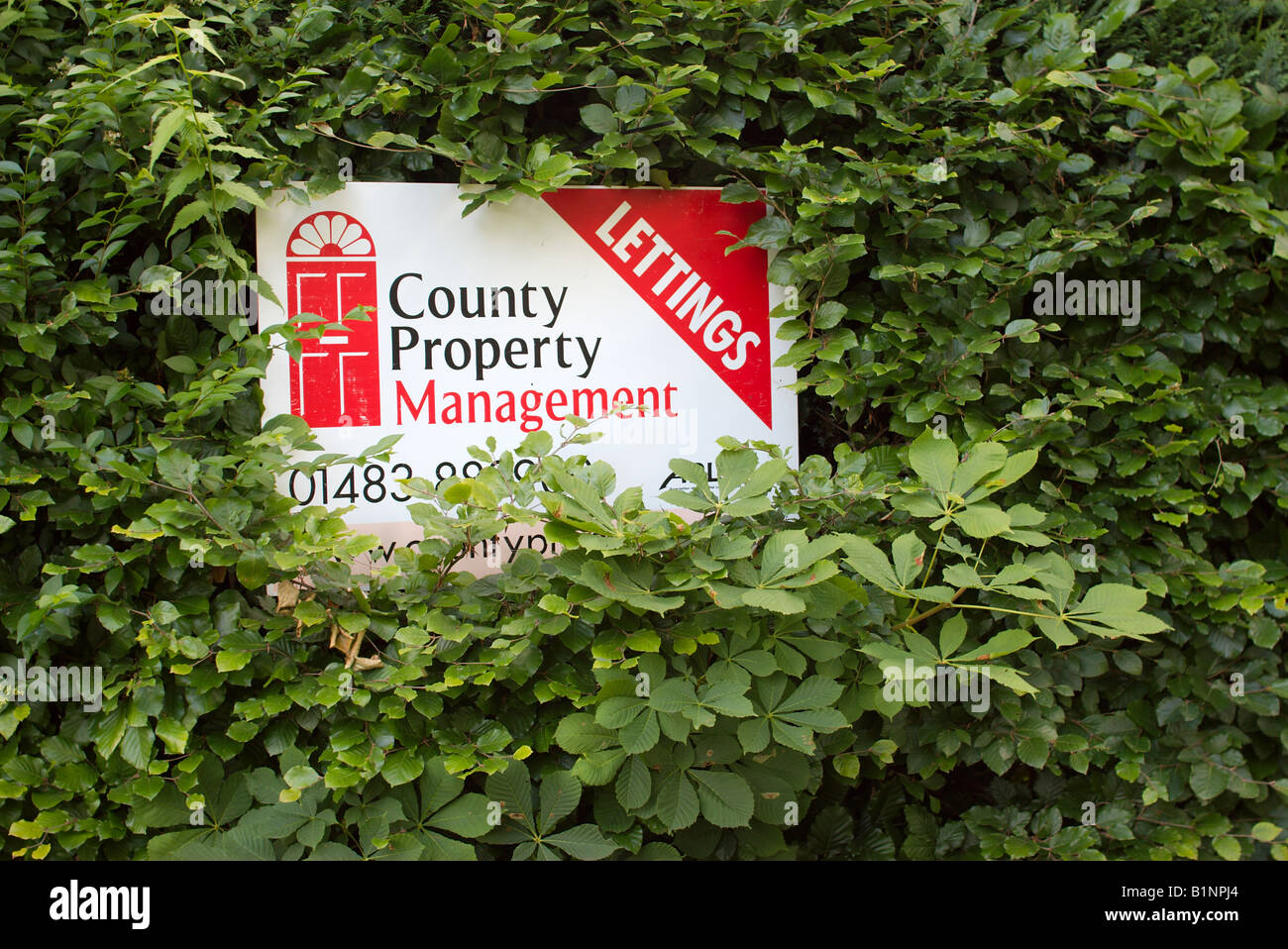 Sign overgrown by a bush reads Lettings Country Property Management - Stock Image