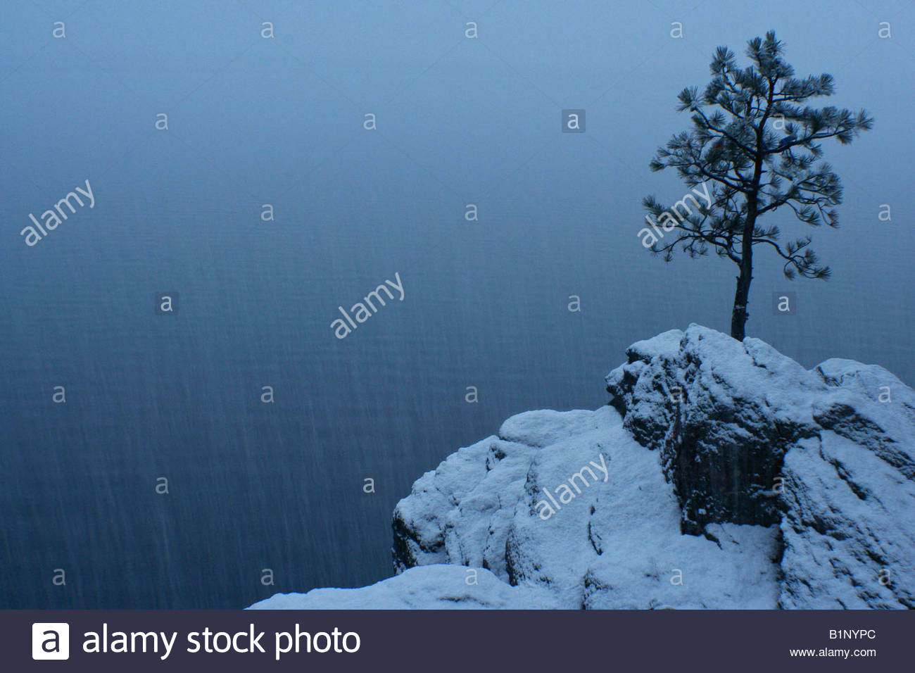 A lone pine on the shore of Lake Coeur D Alene during a snow storm - Stock Image